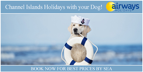 CI web Dog Holidays assets intro